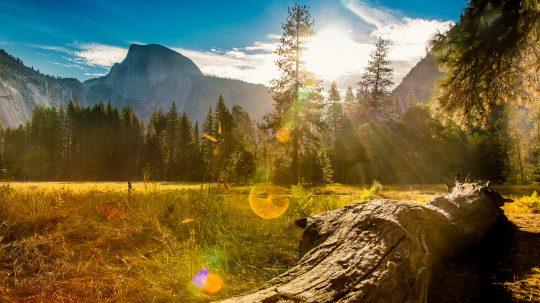 Subaru National Parks - Teddy V