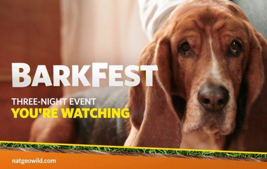 Barkfest Spot 1